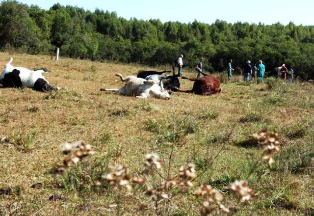 Duas empresas de aviação agrícola de São Sepé estão proibidas de fazer aplicações Fernando Ramos /