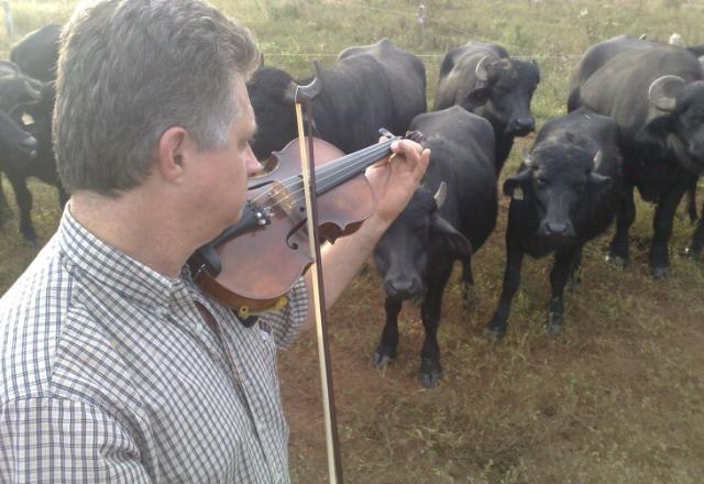 Pecuarista usa o som do violino para atrair búfalos no Vale do Rio Pardo Letícia Mendes/