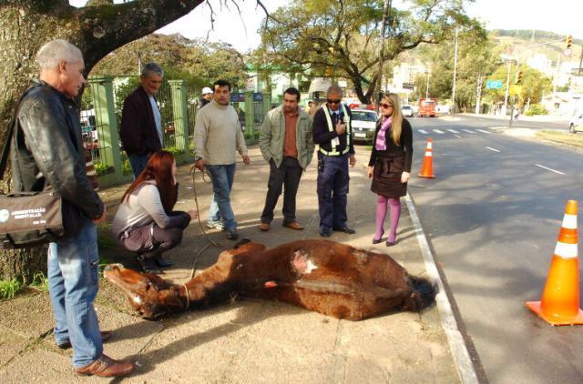 Machucado, cavalo tomba e agoniza em rua de Porto Alegre Ronaldo Bernardi/