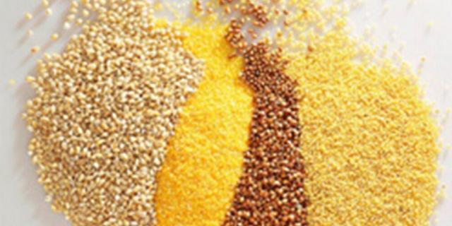 Conheça o painço: além de prevenir doenças, cereal é aliado na perda de peso  Divulgação, Rede Mundo Verde/